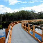 Urunga Wetlands & Boardwalk Scene Peter Lister