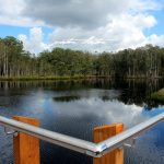 Urunga Wetlands & Boardwalk Water Peter Lister