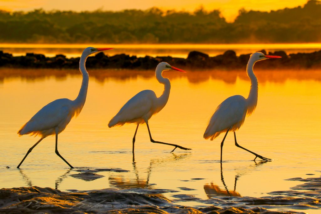 Birds at Urunga NSW
